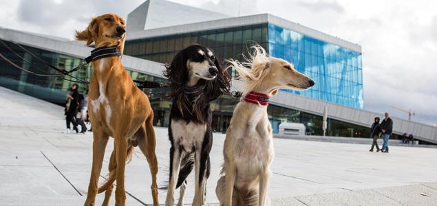 Hunder på operataket i Oslo