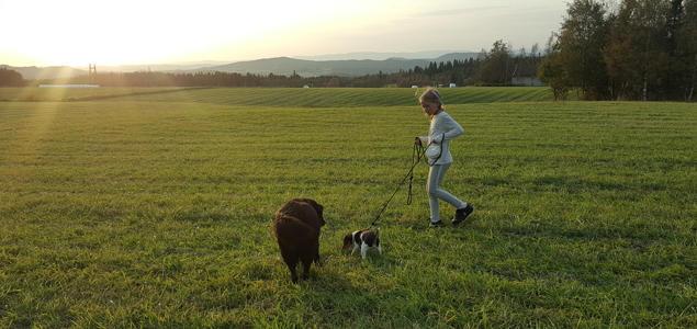 Jente med hunder på et jorde i solnedgang