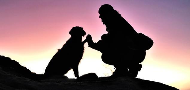 Hund og menneske i solnedgang