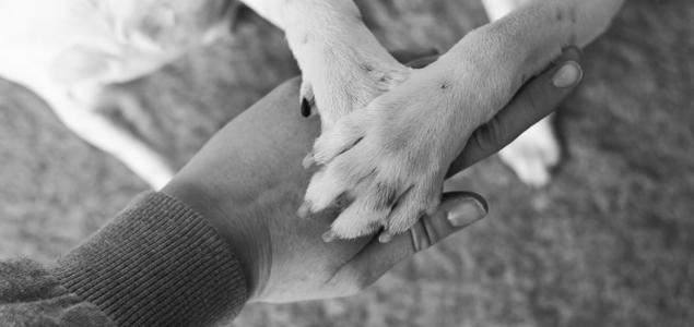 Hundelabber og menneskehender sammen