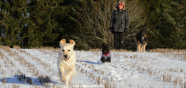 Glade frie hunder på jordet