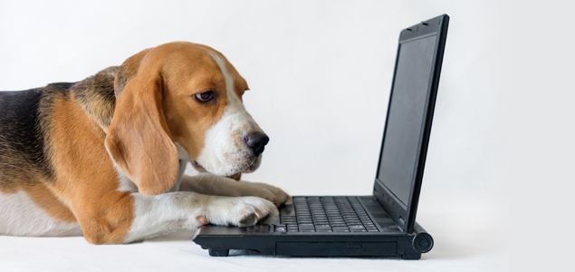 Hund ved laptop