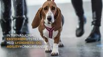 NKK Fauske 2018 basset hound