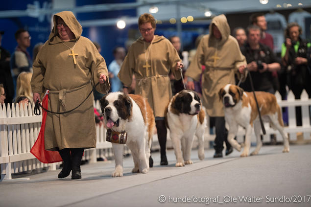 sankt bernhardshund dogs4all raseparade