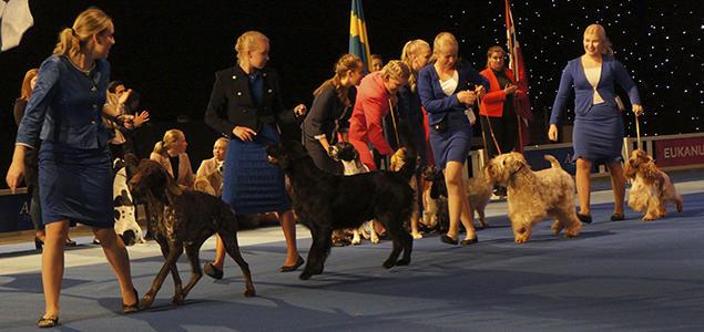 nordisk mesterskap juniorhandling dogs4all 2018