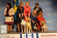dogs4all 2018 juniorhandling nordisk mesterskap
