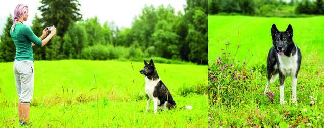 Hvordan ta bedre bilder av din hund. Unngå fugleperspektiv.