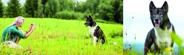 Hvordan ta gode hundebilder. Setter du deg ned på huk er det lettere å komponere et fint bilde