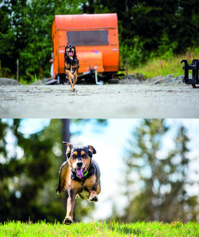 Hvordan ta bedre bilder av hunden. Unngå støy i bakgrunnen