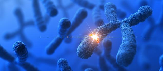 kromosomer