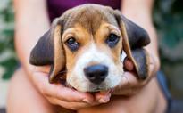 Pass på hunden i hsøt, foto: iStock