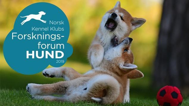 akitavalper, norsk kennel klub, forskningsforum 2019