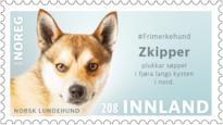 #frimerkehund zkipper norsk lundehund norsk kennel klub