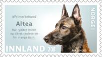 #frimerkehund altea belgisk fårehund malenois norsk kennel klub minehund