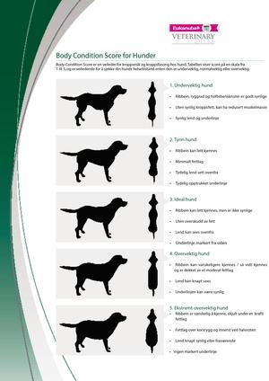 Body condition score chart