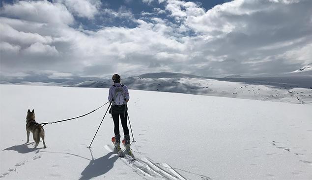 hund og eier på skitur på isen
