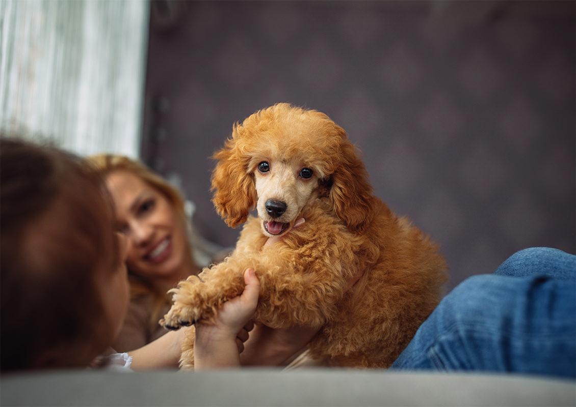 Dame holder labben til hund