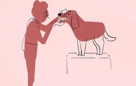 Ny på hundeutstilling